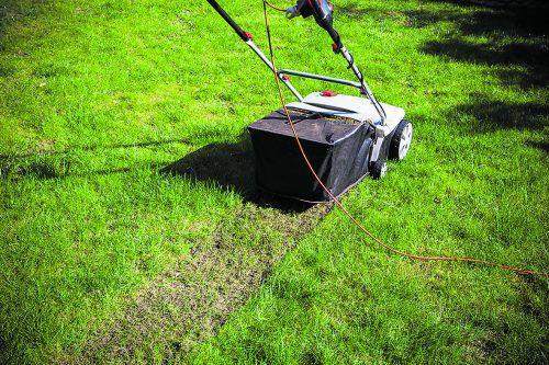 """Moos und Rasenfilz werden beim Vertikutieren beseitigt und der Rasen kann wieder """"durchatmen"""".Istock"""