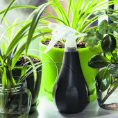 Pflanzen fürs Raumklima
