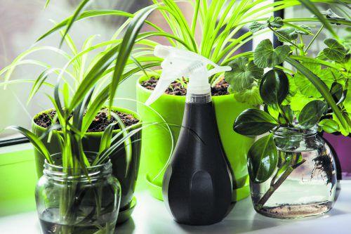 Pflanzen geben über 90 Prozent des Gießwassers wieder an die Luft ab.bild: Shutterstock