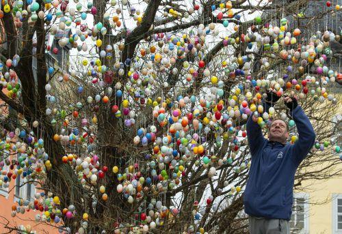 Seit Mitte der 70er-Jahre gehört der Ostereierbaum mit seinen selbstgebastelten Eiern zum österlichen Saalfelder Stadtbild. Auch dieses Jahr wird eifrig geschmückt, bislang zieren rund 7000 bunt bemalte Ostereier den Baum. AP