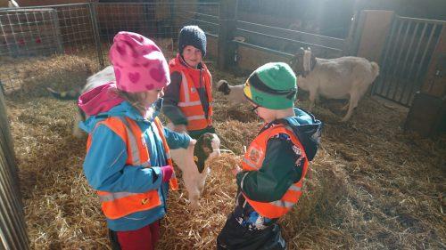 """Allerhand über die tierischen Bewohner und die angebauten Pflanzen lernten die """"Fröschlekinder"""" bei ihrem Besuch beim Sunnahof in Göfis. Kindergarten ÜBersaxen"""