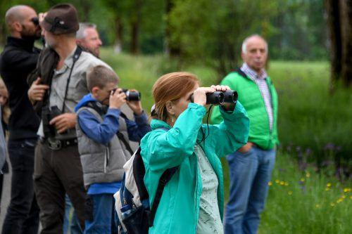 Am 12. Mai findet die erste Exkursion ins Dornbirner Ried statt. VN