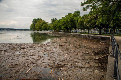 Auch vor der Seepromenade in Bregenz schwimmt derzeit ein Holzteppich. VN/Paulitsch