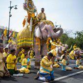 Elefanten fallen wegen Thailands König auf die Knie