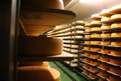 Blick in den Käsekeller der Sennerei Doren Huban, der renoviert werden wird. Investitionen sind auch in der Produktion notwendig. VN