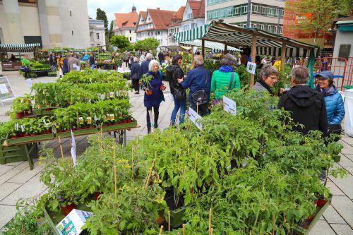 Der Gartentag sorgte für viel Grün auf dem Dornbirner Marktplatz. BIN