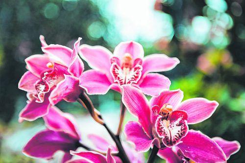 Der Orchideengarten in Funchal ist ein Paradies für alle Pflanzenliebhaber.