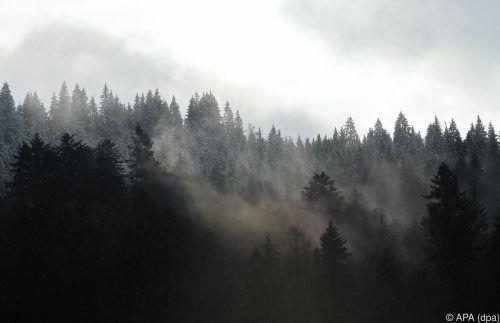 Die Bäume wachsen durch Klimawandel zwar schneller, sterben aber früher. APA