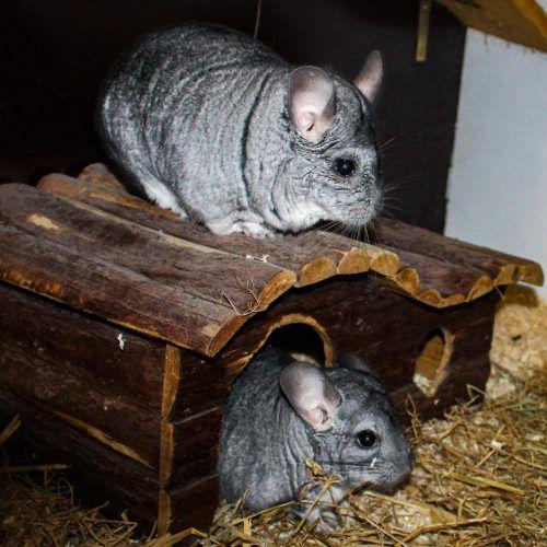 Die Chinchillas Cocko und Rocko, das Nymphensittichpaar Max und Milly sowie die Hunde Alvin (l. u.) und Cookie möchten am liebsten sofort in ein richtiges Daheim ziehen.TSH