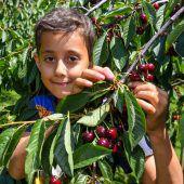 Kälteeinbruch sorgt für Unruhe bei den Obstbauern
