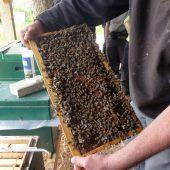 Imker laden zum Tag des offenen Bienenstocks