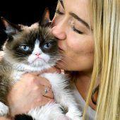 Grumpy Cat ist gestorben