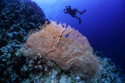Ein Taucher schwimmt über ein Korallenriff, das auch vom Klimawandel bedroht ist. AFP