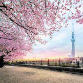 Tokio: Frau Misuzu sieht rosa