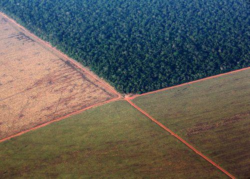 Forscher fürchten, dass im Amazonasgebiet eine Fläche der Größe Griechenlands abgeholzt werden könnte, um den chinesischen Soja-Hunger zu stillen. reuters