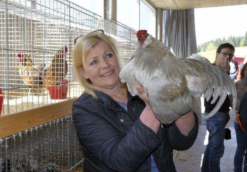 Ilse suchte ein neues Zuhause für ihren Araucana-Hahn.