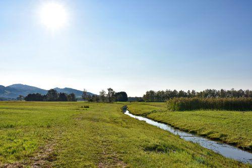 Im Rheindelta finden sich auf einer Fläche von rund 2000 Hektar Flachwasserbereiche, Schilfröhrichte, Feuchtwiesen und Auwälder. Birdlife