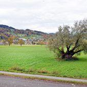Sportanlage Gaißau in der Zielgeraden