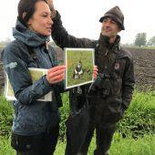Reh und Hase trafen sich im Dornbirner Ried