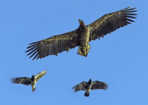 Vogelexpertin Hemma Gressel von der Vogelschutzorganisation Birdlife meinte, dass große Greifvögel wie Seeadler nicht für das Showgeschäft geeignet wären. AP