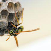 Insekten ohne Gift vertreiben