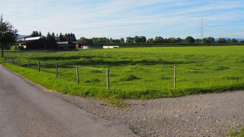 Auf dieser Altacher Wiese, die im Besitz der Gemeinde Götzis ist, könnte zukünftig Kies abgebaut werden. Möglicherweise wird dazu das Volk befragt. egle