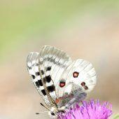 Blütenreichtum für Bienen und Insekten