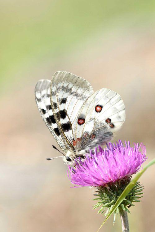 Das Wohlergehen der bestäubenden Insekten und die Artenvielfalt stehen im Mittelpunkt. A. Grabs