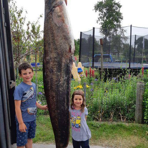 Dicker Fisch: Der Wels war stattliche 2,45 Meter lang und brachte rund 100 Kilogramm auf die Waage.