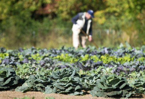 Die Landgenossen sprechen nicht nur Landwirte an, sie pachten auch landwirtschaftliche Flächen zur Bio-Bewirtschaftung.                DPA