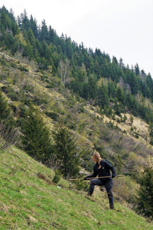 Die Weidepflege im Steilhang ist sehr kräfteraubend.