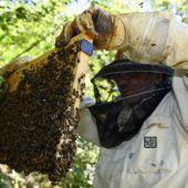 Kombi-Effekt tötet Bienen