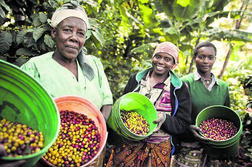 Fairtrade bedeutet gesunde Lebensmittel aus kleinbäuerlichen Strukturen und unterstützt Kleinbauern im globalen Süden. TINEKE D'HAESE
