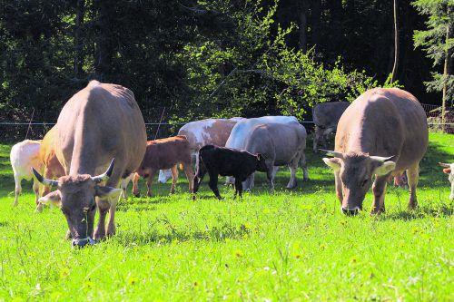 """Familie Martin: """"Auf unserem Hof leben Kühe im Verbund mit ihren Kälbern, die Muttermilch trinken. Sie weiden auf den Alpen und bekommen im Winter Heu."""""""