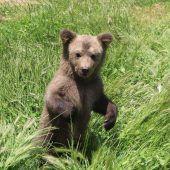 Bärenbaby gerettet