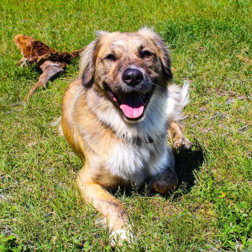 Für die Hunde Pablo (l. o.), Chinook (r. o.) und Lilli (r. u.) sowie für Rattenweibchen und -männchen sucht das Tierschutzheimteam Plätze bei tierlieben Menschen. TSH