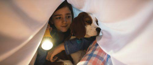 Hund Bailey darf weiterhin Jung und Alt entzücken. Constantin