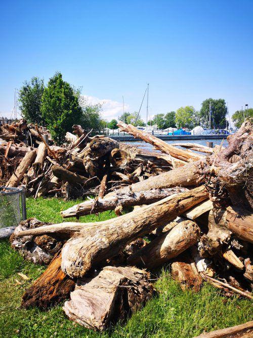 Jede Menge Treibholz gibt es auch am Mehrerauer Seeufer. Stadt