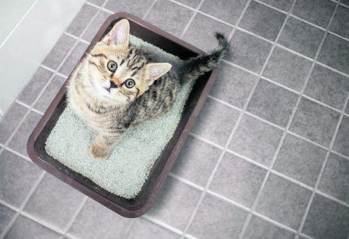Katzenstreu darf auf keinen Fall über die Toilette entsorgt werden!foto: Shutterstock
