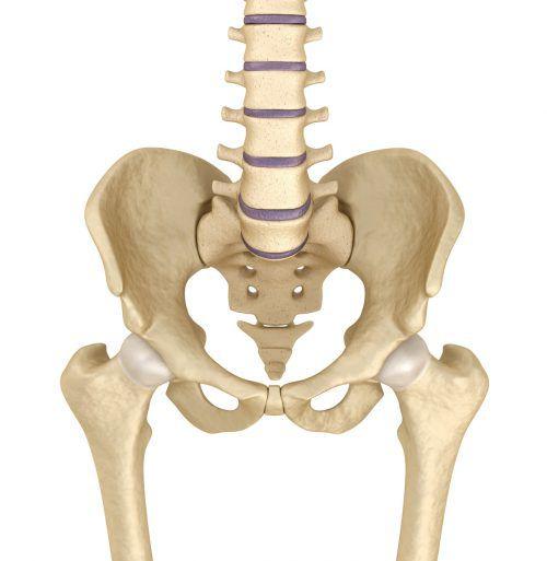 Knochen sollen bald mit dem 3D-Drucker nachgebildet werden. fotolia