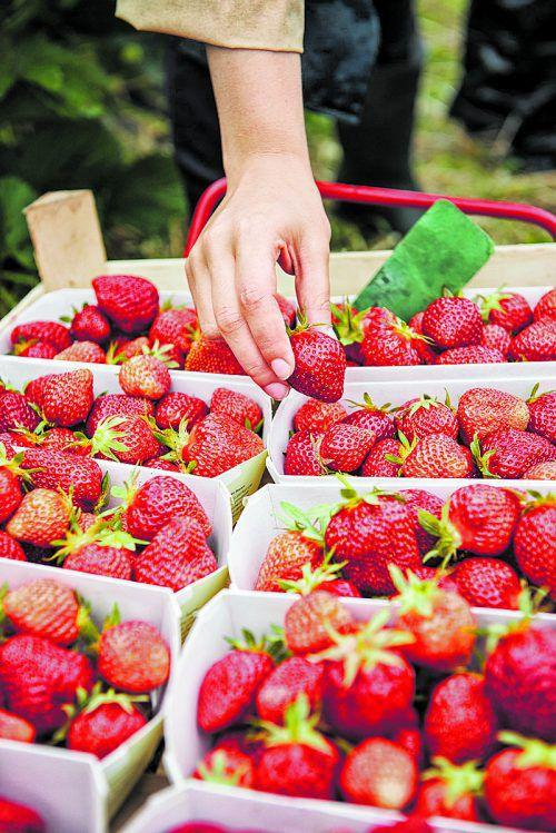 Kunden freuen sich über frische Erdbeeren von Beeren Winder.