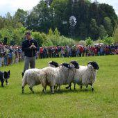 Schaf, Mühle & Handarbeit