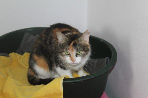 Tierfreunde aufgepasst: Wer hat Platz für Katze Bärbel, Hund Figo (l. u.), Hund Junior oder für eine Ratte, von denen ganz schön viele im Tierschutzheim gelandet sind?TSH