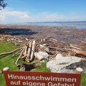 Treibholz-Knatsch am Bodensee
