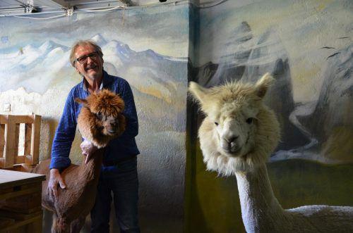 Walter Micheluzzi liebt seine beiden Alpakas Bambolino und Nacho. Für sie ließ er vom Künstler Günter Gruber das Andengebirge auf die Stallwand malen.HRJ