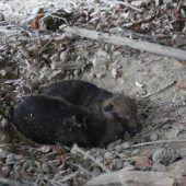 Trauer um Wolfswelpen im Wildpark