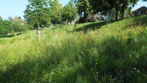 Die Bienenwiese an der Josef-Huter-Straße ist eine Maßnahme in Bezug auf den Klimawandel.Fst
