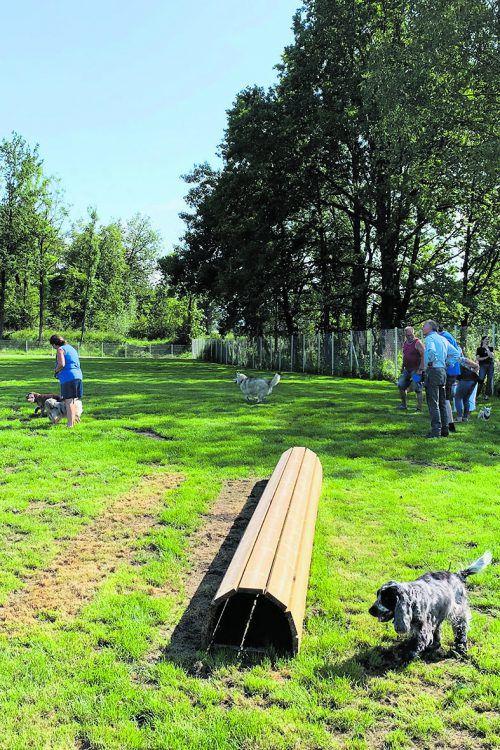 Die neue Hundespielwiese befindet sich im Bereich Martinsruh. STD
