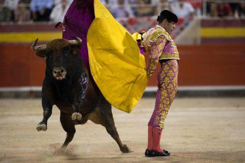 Nach zwei Jahren feiert der Stierkampf auf Mallorca ein Comeback. AFP