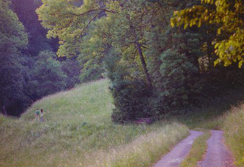 Diese Waldinsel (links 1998) wurde im Juni fast komplett abgeholzt, das führt jetzt zu Kritik. Lebenswertes Klaus (Gisinger bzw. Zeiner)